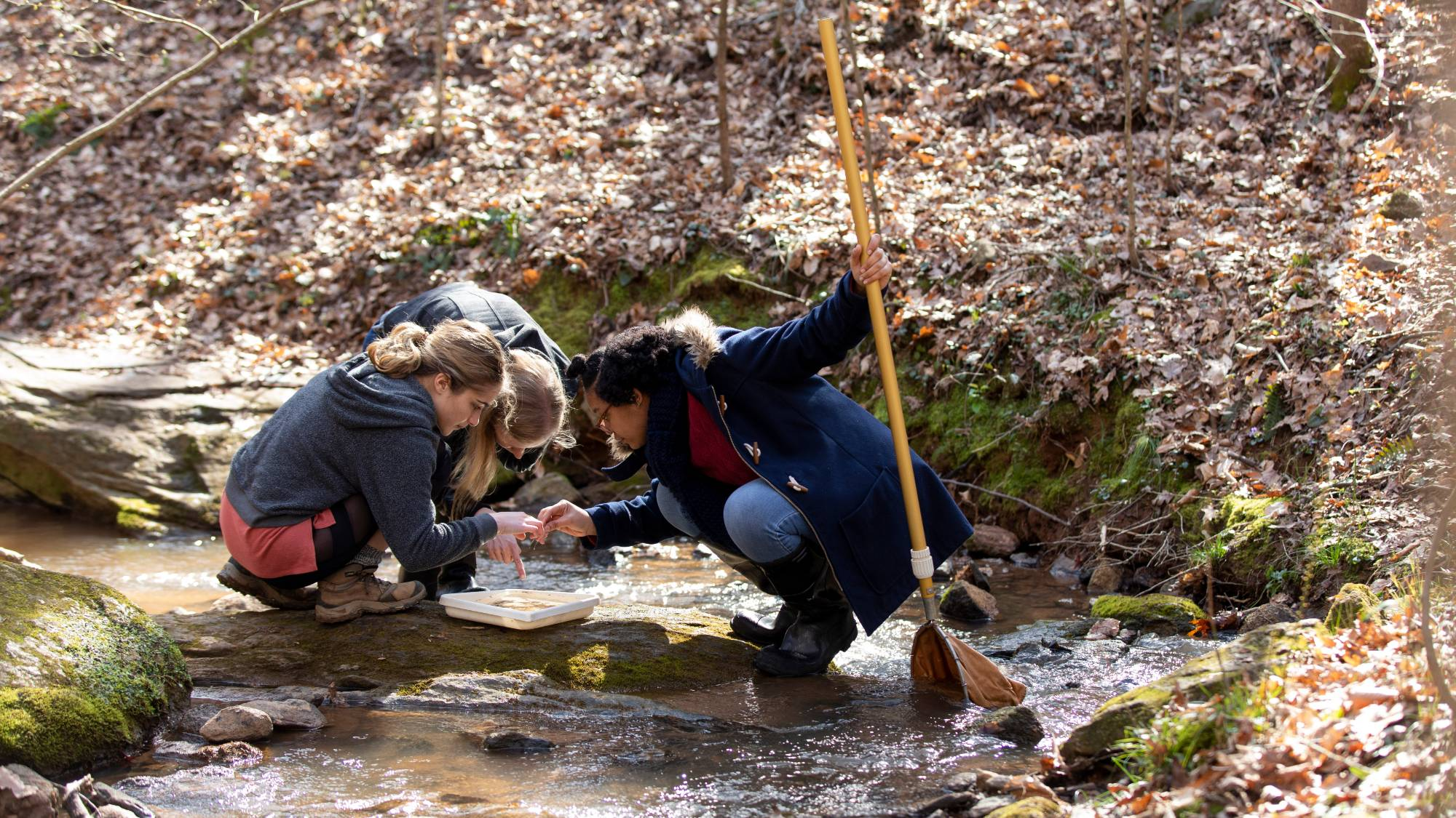 Three people crouch in a stream looking at a sample in a tray